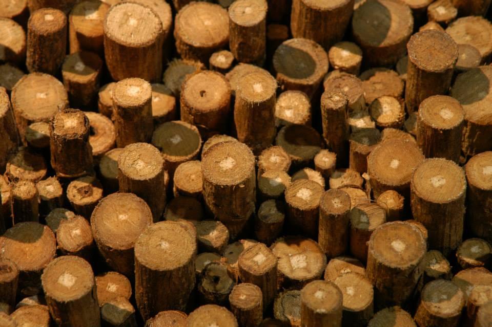 troncos teca